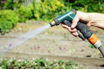 Woman at gardening uses garden hose for watering