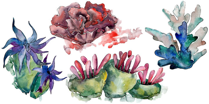 Colorful aquatic underwater nature coral reef. Watercolor background set. Isolated coral illustration element.
