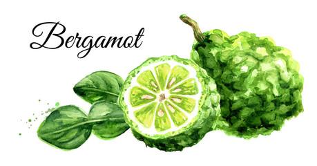 Fresh bergamot fruit. Watercolor hand drawn illustration isolated on white background
