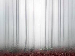 fantasy bright forest with fog and blur