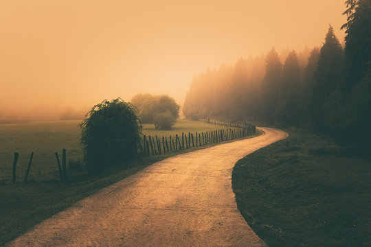 vintage nature landscape with a foggy path