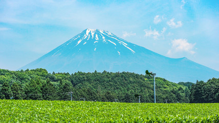 beautiful Fuji mountain and fresh organic green tea farm on summer season. Wall mural