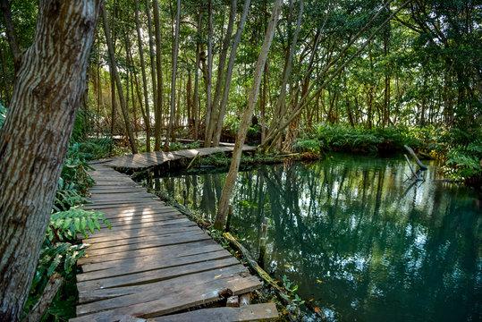 Mangrove forest by the Ria Celestun lake