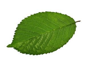 Fototapete - Green leaves isolated on white