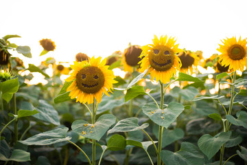 Close-up of smiling  sunflowers growing outdoors during sunny day