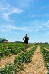 Junge Frau geht durch ein Erdbeerfeld. Ansicht von hinten. Standort: Deutschland, Nordrhein-Westfalen, Heiden