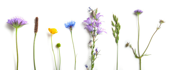 closeup of wild grass and flowers on white background Fotomurales