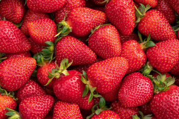 Red large ripe strawberries close-up. Harvest berries. Wall mural