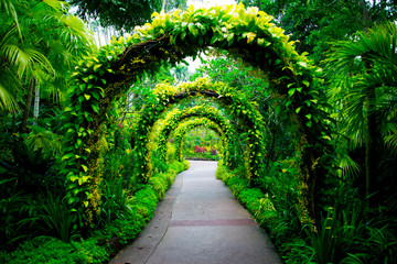 Singapore Botanic Gardens Fototapete