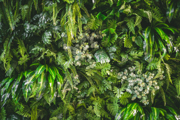 Wall Murals Plant walll full of variety of green leaf topical plants some with flowers for background use.