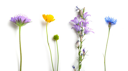 closeup of wild flowers on white background