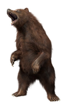 3D Standing Bear isolated on white background