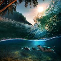 Fotobehang Nachtblauw Turtle in Sea