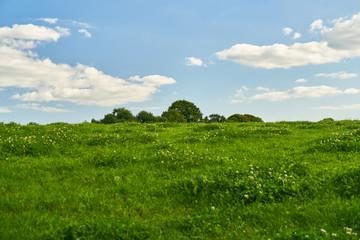 Gras auf grüner Wiese vor blauen Himmel mit Wolken