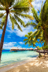 View of the sandy beach with palm trees, Bora Bora, French Polynesia. Vertical.