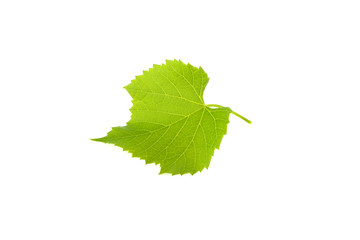 green grape leaf isolated on white background Fototapete