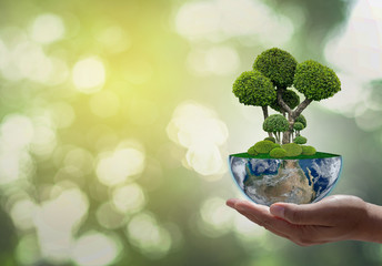 Tree on Earth. Green Planet on Hands. Save of Earth. Environment Concept for background web or World Guardian Organization