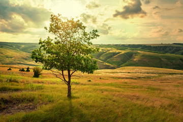 Lonely tree in summer steppe beautiful landscape