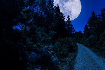 dirt road in the woods with super moon