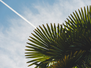 Image of green palm frond with sky background