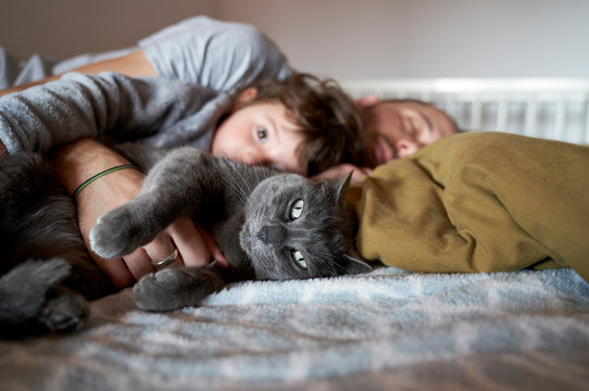 Father sleeping with daughter and cat on bed at home