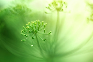 Beautiful green blurry artistic blossom details. Wall mural