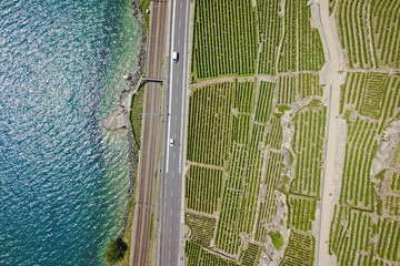 Aerial of vineyards by the lake, Lavaux, Switzerland