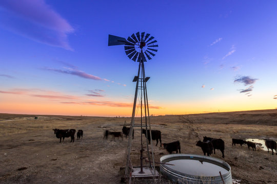 Ellis County, KS USA Traditional Wind Mill on a Midwestern Cattle Farm at Sunset