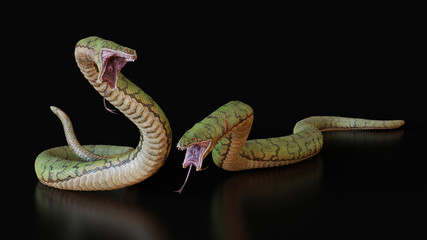 Two snakes.3d illustration