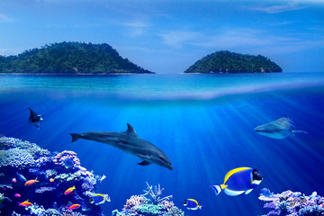 Wall Mural - Background of Islands and underwater coral reef  with Tropical marine fish, dolphin and whale shark