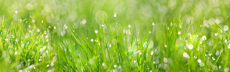 Green grass abstract background. beautiful juicy young grass in sunlight rays. green leaf macro. Bright fresh Summer or spring nature background. long banner.  copy space Wall mural