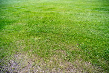 The background of a lawn with dry hole