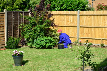 Lady gardening wearing PPE clearing weeds in a garden in the UK
