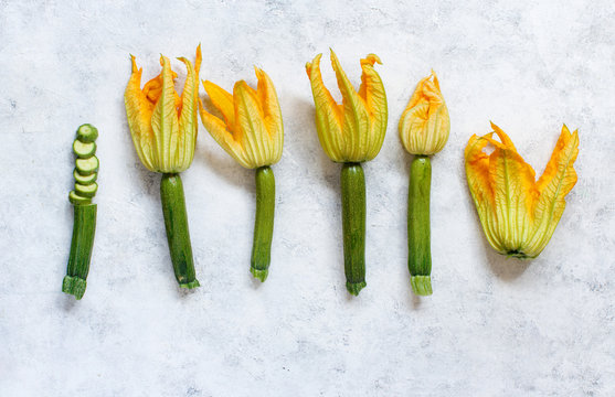 Young Zucchini With Flowers