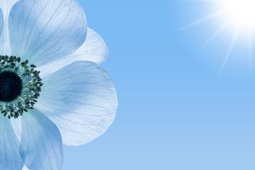 creative design, beautiful macro flower, blue sky with sun beams