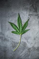 marijuana, hemp leaf on dark grey background