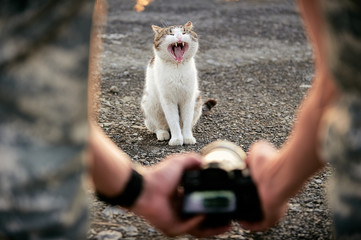 A man photographs a yawning cat. Creative perspective backstage shooting kitty.