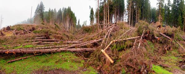 Effetti della tempesta Vaia nel bosco
