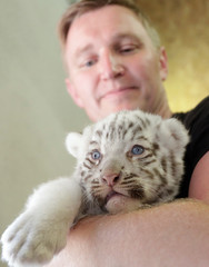 An emlpoyee holds white Bengal tiger cub at the White Zoo in Kernhof