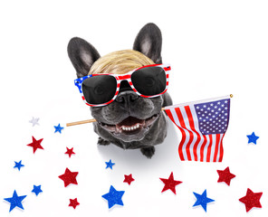 Fotorolgordijn Crazy dog independence day 4th of july dog