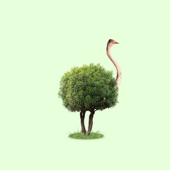 Ostrich with the body as a tree with leaves on green background. Concept of interaction of different nature objects. Negative space. Modern design. Contemporary and creative art collage.