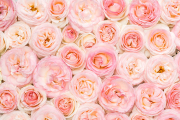 Background image of pink roses. Closeup view