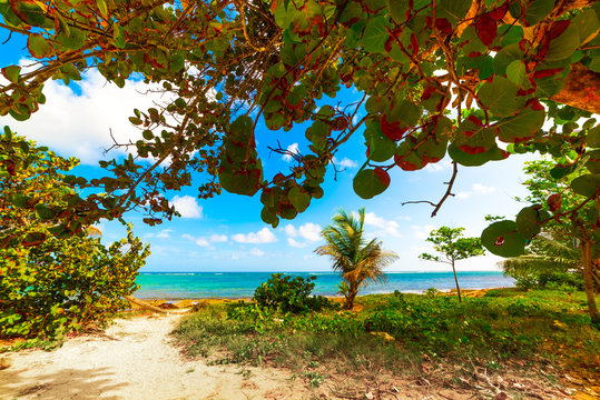 Plants by the sea Le Moule in Guadeloupe