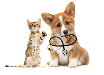 Wall Mural - kitten and puppy vet looks with a stethoscope in his teeth