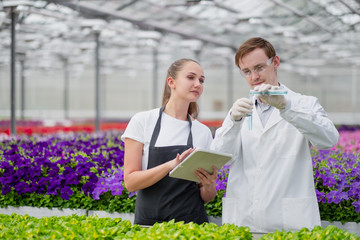 Two scientists agronomist breeder, a man and a woman, take samples in the greenhouse. Wall mural