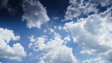 Obraz Mewa na tle chmur. Symboliczne ujęcie. Wolność, swoboda. - fototapety do salonu