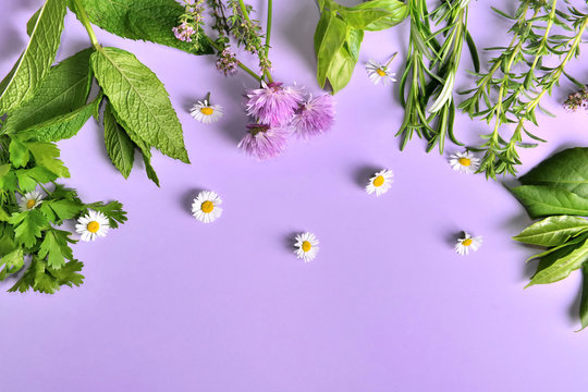 various aromatic fresh herbs with little daisies on purple background