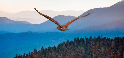 Red-tailed Hawk flying over the mountains with sky background Wall mural