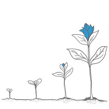 wachsende-Pflanze-blau