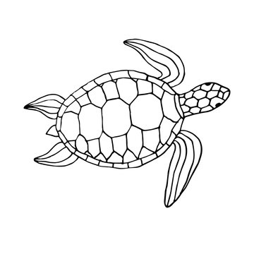 Vector black ink hand drawn sketch doodle sea turtle isolated on white background